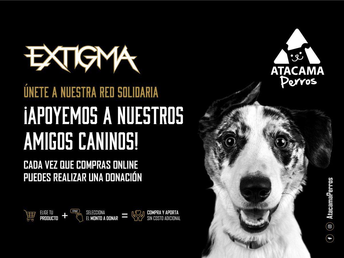 Desde ahora podrás realizar donaciones a nuestras amigas de Atacama Perros